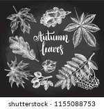 ink hand drawn set of autumn... | Shutterstock .eps vector #1155088753