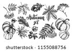 ink hand drawn set of autumn... | Shutterstock .eps vector #1155088756