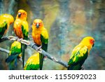 Parrot Conure Bird Is Colorful - Fine Art prints