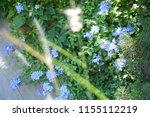 Blue Flower And Tree In Garden...