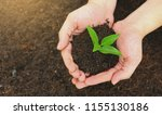 two hands holding a young green ...   Shutterstock . vector #1155130186
