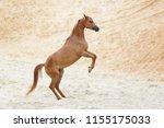 Chestnut Rearing Arabian Horse...