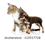 Stock photo dog together with a cat look aside isolated on white background 115517728