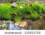 Polypore Growing On A Fallen...