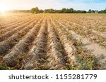 agriculture in germany. in the... | Shutterstock . vector #1155281779