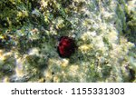 life on stone under the sea | Shutterstock . vector #1155331303
