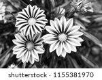 gerbera blossom on blurred... | Shutterstock . vector #1155381970