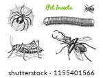big set of insects. bugs... | Shutterstock .eps vector #1155401566