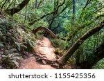 Hiking Trail Through The Lush...