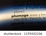 plumage word in a dictionary.... | Shutterstock . vector #1155432106