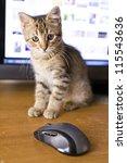 Stock photo small cat 115543636