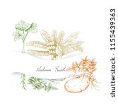 autumn vegetables and herbs ... | Shutterstock .eps vector #1155439363