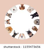 Stock photo round collage of different breed dogs 1155473656