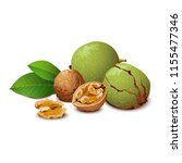 walnut with leaves on white.... | Shutterstock .eps vector #1155477346