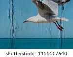 seagull soaring over ocean ... | Shutterstock . vector #1155507640