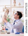 crazy professor studying human...   Shutterstock . vector #1155547123