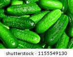 lots of green cucumbers. clean... | Shutterstock . vector #1155549130