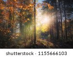 autumn forest bathed in sunlight | Shutterstock . vector #1155666103