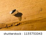 fly sitting on a wooden... | Shutterstock . vector #1155753343
