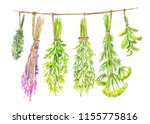 herbs are dried on a string.... | Shutterstock . vector #1155775816