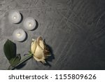 beautiful white rose and... | Shutterstock . vector #1155809626