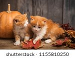 Stock photo halloween pumpkin jack o lantern and ginger kitten on black wood background 1155810250
