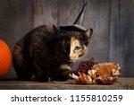 black cat on black wood... | Shutterstock . vector #1155810259