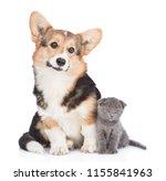 Stock photo corgi puppy sitting with tiny kitten isolated on white background 1155841963
