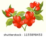 bundle of botanical drawings... | Shutterstock .eps vector #1155898453