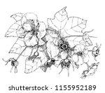 botanical illustration leaf   Shutterstock .eps vector #1155952189