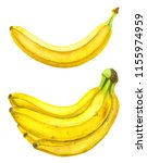 bananas painted with... | Shutterstock . vector #1155974959