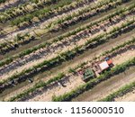 tractor collecting grapes after ... | Shutterstock . vector #1156000510