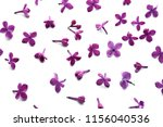 beautiful lilac flowers on... | Shutterstock . vector #1156040536