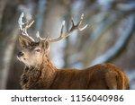 bull elk in a forest | Shutterstock . vector #1156040986