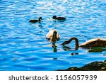 birds in water at lake bled in...   Shutterstock . vector #1156057939