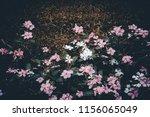 vintage retro of green plant in ... | Shutterstock . vector #1156065049