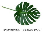 green monstera plant leaf with... | Shutterstock . vector #1156071973