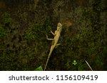 a beautiful yellow lizard... | Shutterstock . vector #1156109419