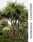 monte palace tropical garden...   Shutterstock . vector #1156159009
