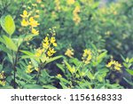 flowers used for decorating the ... | Shutterstock . vector #1156168333