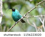 beautiful and colorful green... | Shutterstock . vector #1156223020