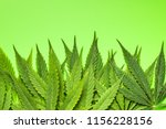 green cannabis leaves on green... | Shutterstock . vector #1156228156