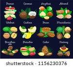 set of nuts poster in shell... | Shutterstock .eps vector #1156230376