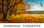 autumn nature background.... | Shutterstock . vector #1156269193