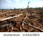 Area Of Illegal Deforestation...