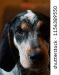 eye of a dog | Shutterstock . vector #1156389550
