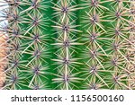 closeup of cactus. texture of... | Shutterstock . vector #1156500160