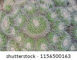closeup of cactus. texture of... | Shutterstock . vector #1156500163