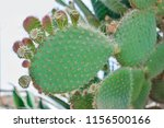closeup of opuntia with blurry... | Shutterstock . vector #1156500166
