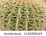 closeup of cactus. texture of... | Shutterstock . vector #1156500169
